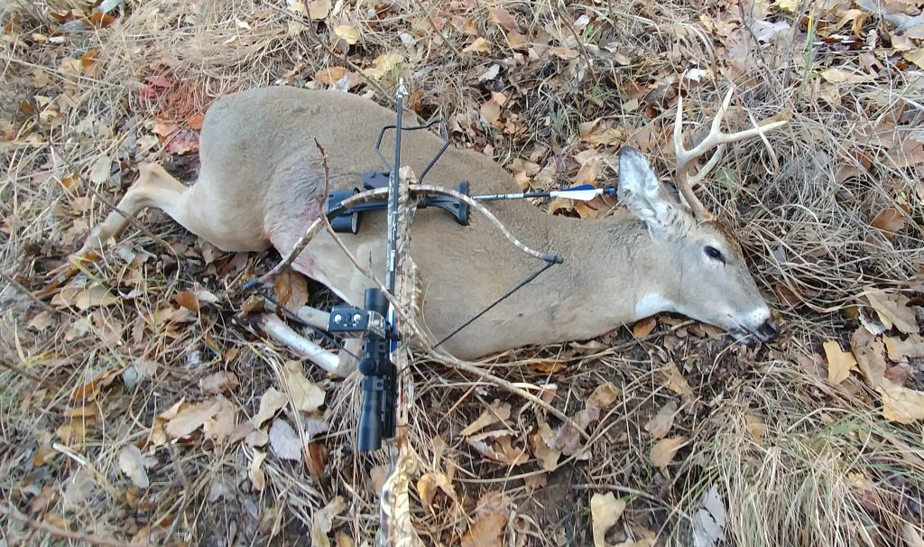 Hunting with the SA Sports Fever recurve crossbow  – Ross's stuff n